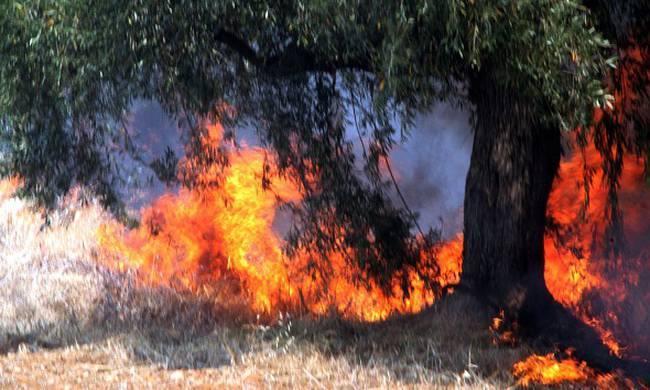 ΕΚΤΑΚΤΟ – Πυρκαγιά