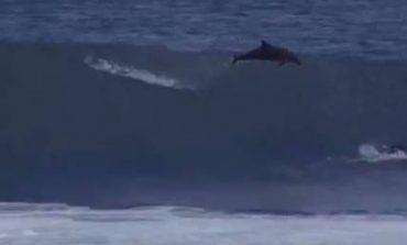 Δελφίνι προσγειώθηκε πάνω σε έναν 13χρονο όταν έκανε σερφ (vid)
