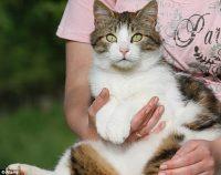 Κι όμως, μια τρυφερή αγκαλιά σε ένα γατάκι μπορεί να σε… σκοτώσει