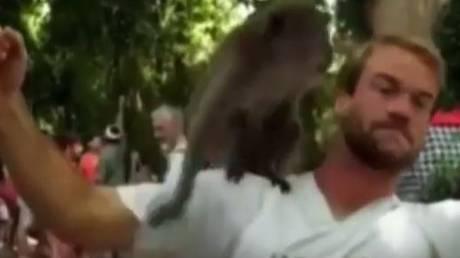 Μαϊμούδες συνευρέθησαν ερωτικά πάνω στο κεφάλι τουρίστα (vid)