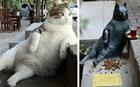 Άγαλμα στη μνήμη του Tombili, του αγαπημένου γάτου της Κωνσταντινούπολης!