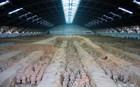 Αρχαία Κίνα: Έλληνας γλύπτης εκπαίδευσε τους ντόπιους