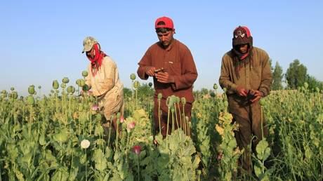 Αφγανιστάν: Μεγάλη αύξηση της παραγωγής οπίου το 2016