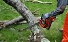 Ξάνθη: Δέντρο έπεσε πάνω σε 52χρονο και τον σκότωσε