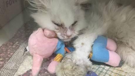 Ο ετοιμοθάνατος αδέσποτος γάτος σώθηκε και μεταμορφώθηκε σε πρίγκιπα (pics)