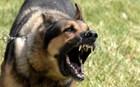 Σκύλος δάγκωσε στο κεφάλι 16χρονη μαθήτρια!
