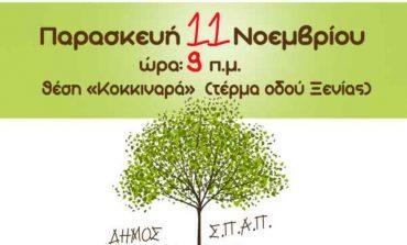 «Φυτεύω ένα δέντρο, συμβάλλω στην ελπίδα», δράση μαθητικής Αναδάσωσης Δήμου Κηφισιάς, ΣΠΑΠ
