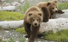 Δύο αρκουδάκια έκαναν βόλτες στο κέντρο της Καστοριάς!