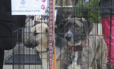 Puppy Day- Μία σημαντική κίνηση για τα αδέσποτα κουτάβια της Κηφισιάς
