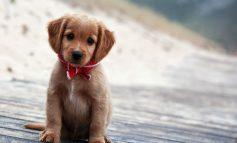 Puppy day και σήμερα 6/11  στην Κηφισιά