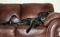 Έξι λόγοι για να σηκωθείτε από τον καναπέ