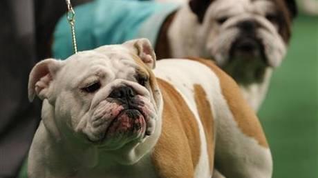Τεστ DNA σε σκυλιά που ρυπαίνουν ζητά Δήμαρχος του «Εθνικού Μετώπου»