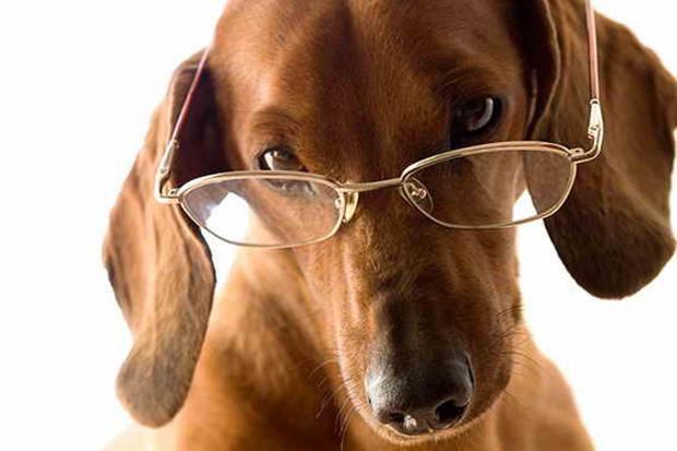 Κι όμως, ο σκύλος σας μπορεί να καταλάβει πότε συμπεριφέρεστε άσχημα στους άλλους