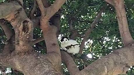 «Γάτα γκάνγκστερ» απειλεί γειτονιά του Όρεγκον (pic)
