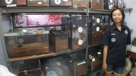Η…ατρόμητη Ming Cu ζει σε ένα σπίτι με 1.500 ταραντούλες (Pic+Vid)