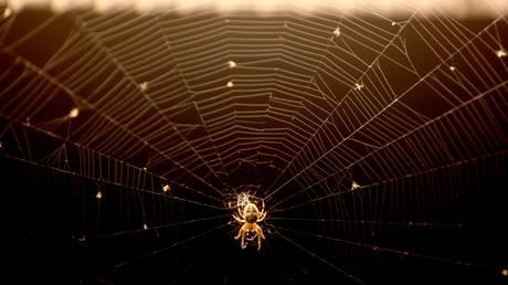 Τεράστιο «πέπλο» από αράχνες κάλυψε λόφο στη Νέα Ζηλανδία (vid)