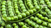 Αρακάς για την χοληστερίνη, την πίεση, την δυσκοιλιότητα αλλά και την προστασία του στομάχου από τον καρκίνο