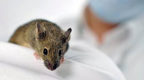 Ελπίδα για… διαστημικές εξωσωματικές, γεννήθηκαν ποντίκια με γενετικό υλικό από το διάστημα