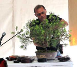 Εντυπωσίασαν τα φυτά «Bonsai και Σαρκοφάγα» στην 63η Ανθοκομική Έκθεση Κηφισιάς