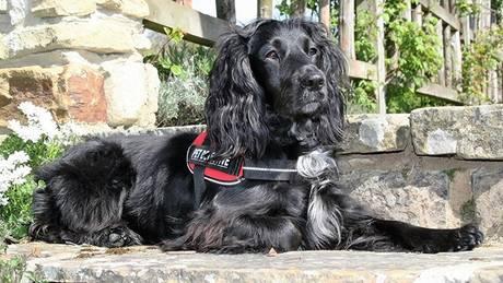 Η Molly είναι ο πρώτος σκύλος στον κόσμο που εκπαιδεύτηκε να εντοπίζει γάτες (pic)