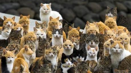 Ιαπωνία: Θεραπευτικό το γουργούρισμα της γάτας κατά του στρες στο γραφείο