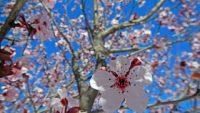 Ο φετινός Απρίλιος ήταν ο δεύτερος πιο ζεστός στα μετεωρολογικά χρονικά