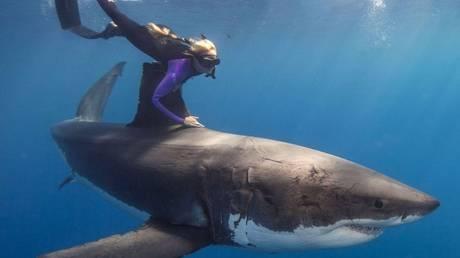 Πιθανότερος ο θάνατος από αστεροειδή, παρά από καρχαρία