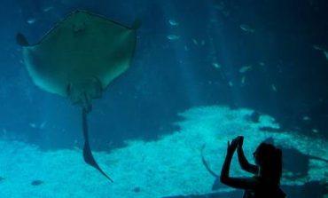 SOS εκπέμπουν οι μπακαλιάροι, τα σαλάχια και οι καρχαρίες της Μεσογείου