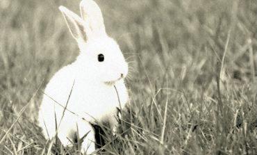 Διήγημα: «Κουνέλι ανά χείρας» Του Παναγιώτη Γκούβερη