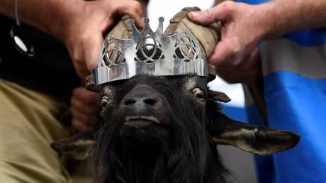 Ιρλανδία: Κατσίκα στέφθηκε… βασίλισσα (pics)