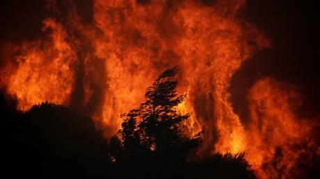 Ιταλία: Δεκάδες τα πύρινα μέτωπα – Στις φλόγες τα δέντρα-«ύμνος» στον Μουσολίνι (pics)