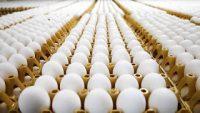 Μολυσμένα αυγά: η Ολλανδία επεκτείνει τους ελέγχους στο κρέας των πουλερικών