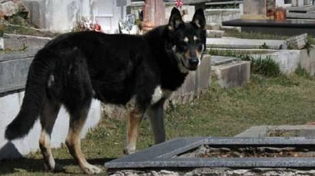 Σκύλος κάθεται πάνω από τον τάφο του αφεντικού του εδώ και 10 χρόνια (Vid)