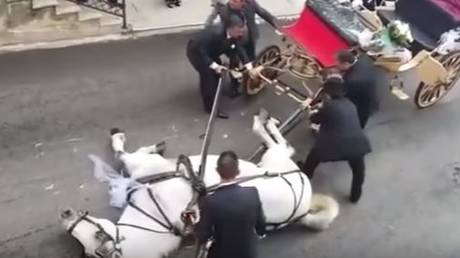 Άλογο που μετέφερε μελλόνυμφους… κατέρρευσε από τη ζέστη (vid)