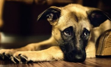 Ένα χρόνο φυλακή σε συνταξιούχο για κακοποίηση σκύλου