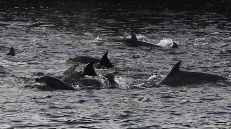Κίνα: Ομάδα χωρικών σώζει δεκάδες δελφίνια που είχαν βγει στη στεριά (vid)