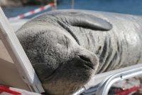 Το θάνατο της Αργυρώς επιβεβαιώνει το Ινστιτούτο «Αρχιπέλαγος»