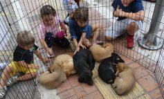 Το POLIS24 βρέθηκε στο puppy day το Σάββατο 23 Σεπτεμβρίου 2017