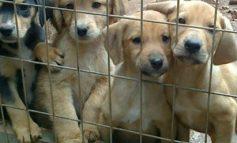 Puppy Day αύριο Σάββατο 23/09 και κάθε Σάββατο στο κέντρο της πόλης.