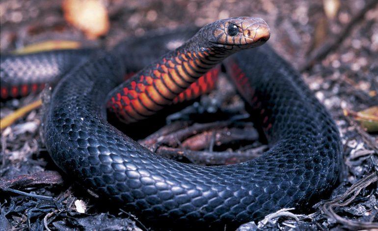 Μετά τα φίδια ήρθε και το μαύρο.
