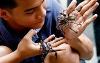 Αν φοβάστε τις αράχνες, μάλλον φταίνε… οι γονείς σας