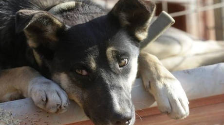 Ιταλίδα έλαβε άδεια μετ' αποδοχών για να φροντίσει τον σκύλο της!
