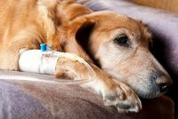 Ο καρκίνος απειλεί και τα ζωάκια μας. Σημάδια ότι κάτι πάει στραβά