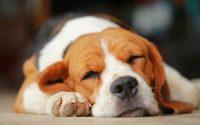 Όσοι μοιράζονται τη ζωή τους με έναν σκύλο κερδίζουν χρόνια ζωής