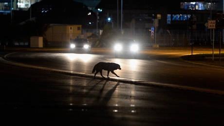 Αδέσποτος σκύλος σώζει γυναίκα στο δρόμο από ληστεία (vid)
