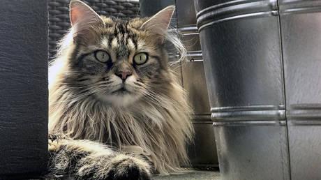 Ιαπωνία: Αδέσποτη γάτα ο κύριος ύποπτος για την άγρια δολοφονία ηλικιωμένης