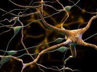 Μπορεί το Αλτσχάιμερ να προληφθεί με ένα εμβόλιο;