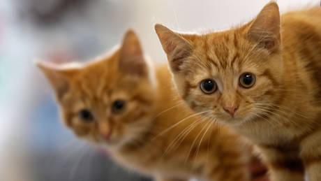 Πώς οι γάτες απομακρύνουν τον κίνδυνο άσθματος στα παιδιά
