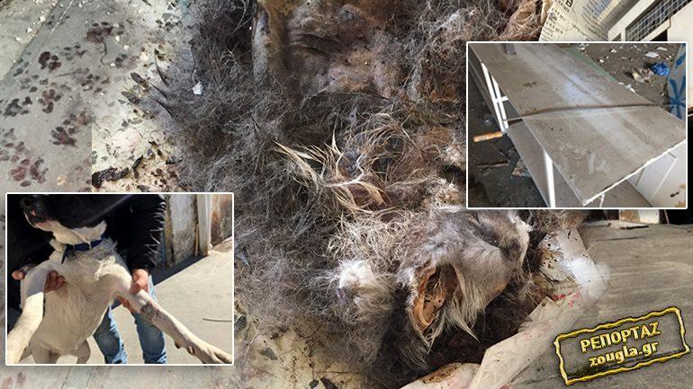 Κολαστήριο ζώων στο Περιστέρι. Προσοχή σκληρές εικόνες.