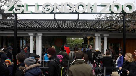 Βρετανία: Επαναλειτουργεί ο ζωολογικός κήπος στο Λονδίνο μετά την πυρκαγιά (pics)